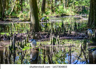 Lowcountry marsh land that was formerly slave planted rice fields in South Carolina