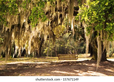 Lowcountry South Carolina Spanish Moss Drapsed Live Oak