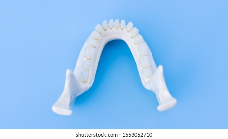 Lower human jaw with teeth anatomy model medical illustration isolated on blue background. Healthy teeth, dental care and orthodontic concept