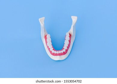 Lower human jaw with teeth and gums anatomy model medical illustration isolated on blue background. Healthy teeth, dental care and orthodontic concept