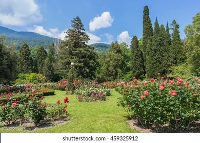 Lower park in Nikitsky Botanical Garden, Yalta, Crimea, Russia.