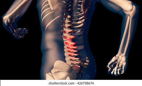 Lower Spine Pain in Human Body Transparent Design 3D Illustration