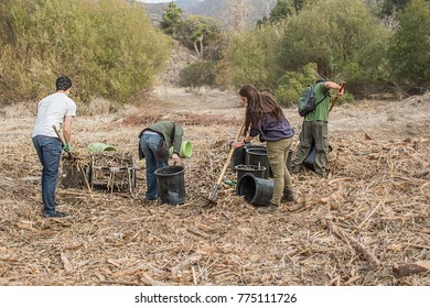 Lower Topanga Canyon, Malibu CA 01-26-2014 Volunteers removing invasive species as part of restoring plants and shrubs