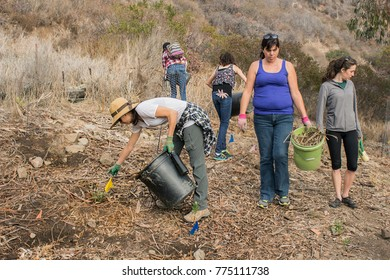 Lower Topanga Canyon, Malibu CA 01-26-2014 Volunteers removing invasive species as part of restoring the canyon