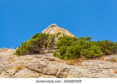 Lower view up on mountain slope covered with few bushes and mountain top in distance lit with sunlight under clean blue sky in Crimea