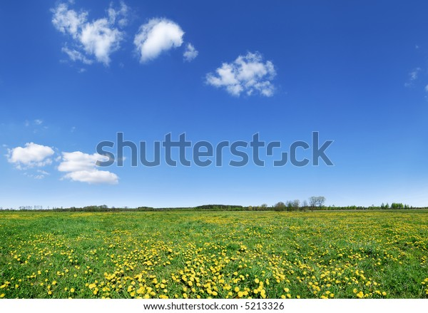 Lowland landscape -  dandelion filed, the blue sky and white clouds