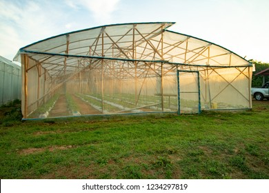 The low-lying Melon Plantation is located on a green grassy muddy fog with golden sunshine in the morning.