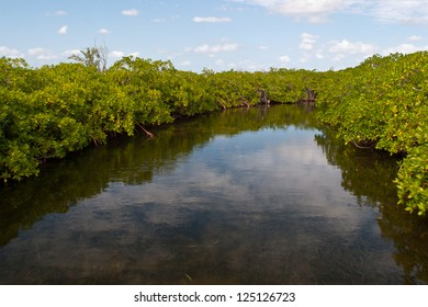 A low-lying sandy island off Belize has lots of mangrove forest surrounding it.  Mangroves are an important nursery for small reef organisms.