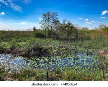 Loxahatchee Slough Natural Area  Palm Beach Gardens, Florida.  Swamp Landscapes and wetland fauna.