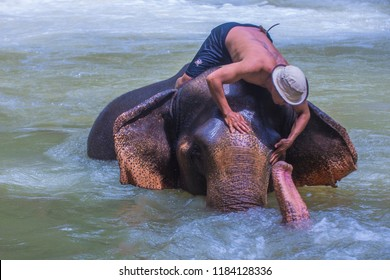 LUANG PRABANG , LAOS - AUG 13 : Elephant bathing in an Elephant camp near Luang Prabang Laos on August 13 2018. Elephant is considered as national animal in Laos
