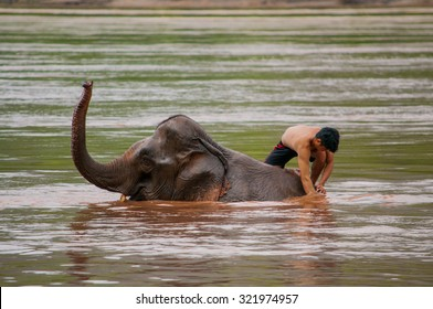 LUANG PRABANG, LAOS - AUGUST 18, 2015: A young mahout is bathing elephant in the Mekong river near Pak Ou cave, Luang Prabang, Laos.