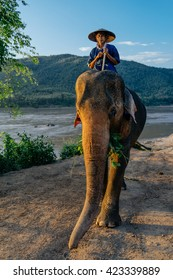 LUANG PRABANG-MARCH 14 :man posing with elephant near the forest on March 14, 2015 in Luang Prabang, Lao