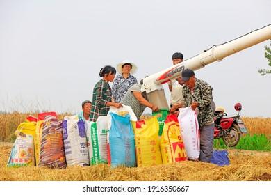 LUANNAN COUNTY, China - June 19, 2018: farmers use harvesters to harvest wheat in fields, LUANNAN COUNTY, Hebei Province, China