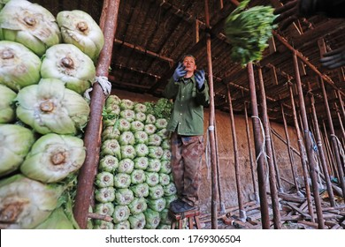 LUANNAN COUNTY - February 26, 2020: Vegetable farmers deliver Chinese cabbage in the cellar, LUANNAN COUNTY, Hebei Province, China