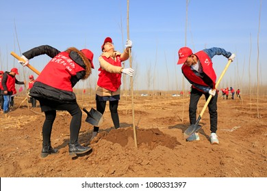 Luannan County - March 21, 2018: young volunteers are planting trees in the fields, Luannan, Hebei, China