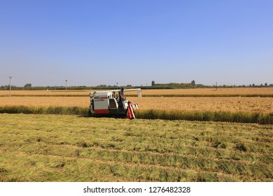 Luannan County - October 2, 2018: harvester harvesting rice in fields, Luannan County, Hebei Province, China