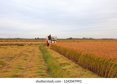 Luannan County - October 20, 2016: combine harvesters to harvest rice in fields, Luannan County, Hebei Province, China