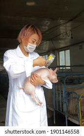 LUANNAN County - September 5, 2017: A beautiful girl is carrying a piglet for vaccination in a pig farm,LUANNAN County, Hebei Province, China