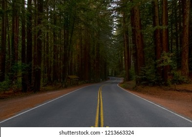 Lucas Valley Road surrounded by giant redwood trees (Sequoia sempervirens) Nicasio, Marin County, California
