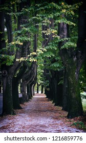 Lucca, Italy, june 30, 2018: avenue with trees in Lucca