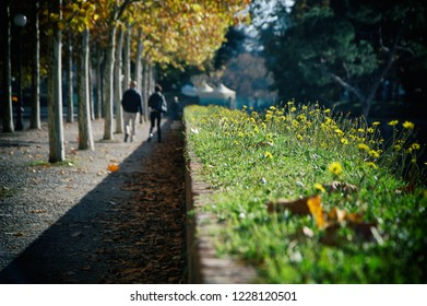 Lucca, Italy, november 11, 2018: autumn on the walls of Lucca.
