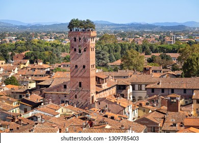 Lucca, Italy. Torre Guinigi - brick tower from 14th century topped by holm-oak trees