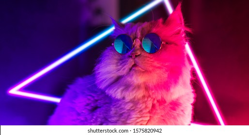 lucifer the cat in a neon environment at night in a club or some other shady place wearing sunglasses beeing cool and hip