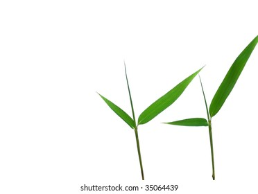 lucky bamboo leaves
