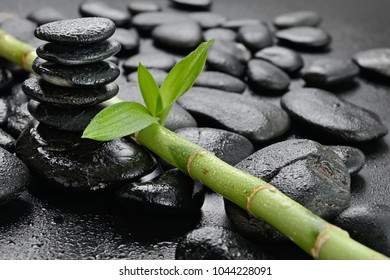 lucky bamboo on the black stones