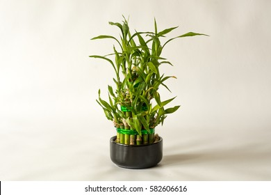 Small Plant Bamboo Images Stock Photos Vectors Shutterstock