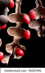 Lucky Bean Seeds (Erythrina Coral flower seeds)