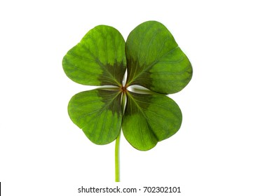 Lucky clover, four leaf clover
