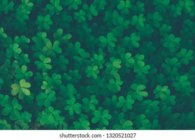 Lucky clover vintage background, traditional symbol of a Saint Patrick's day, springtime Irish holiday