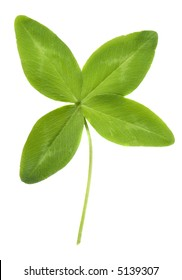 A lucky four leaf clover....what a find!
