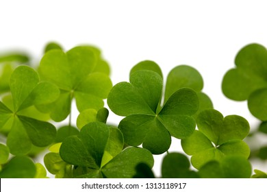 Lucky Irish Four Leaf Clover for St. Patricks Day Isolated on White Background