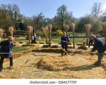 Ludwigburg, Germany - April 8, 2018: Elderly men are demonstrating how grain was threshed manually on a farm in ancient times during the Corn Exhibition around the palace of Ludwigsburg.