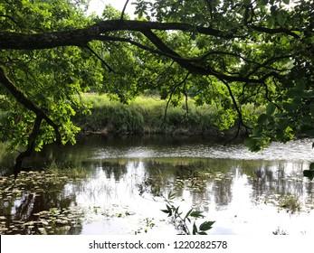 The Luga river