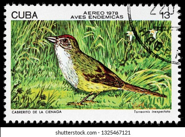 LUGA, RUSSIA - FEBRUARY 17, 2019: A stamp printed by CUBA shows the Zapata sparrow - a medium-sized grey and yellow bird that lives in the grasslands, circa 1978