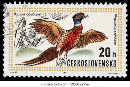 LUGA, RUSSIA - FEBRUARY 17, 2019: A stamp printed by CZECHOSLOVAKIA shows common pheasant, circa 1971