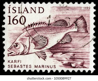LUGA, RUSSIA - JANUARY 16, 2018: A stamp printed by ICELAND shows Rose Fish, also known as ocean perch, Atlantic redfish, Norway haddock, red perch, red bream or golden redfish, circa 1980