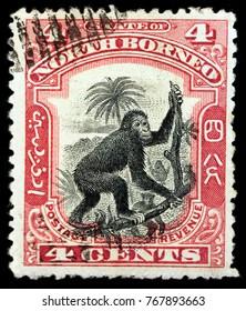 LUGA, RUSSIA - OCTOBER 07, 2017: A stamp printed by NORTH BORNEO shows Orangutans (orang-utan, orangutang, orang-utang) are great apes native to Indonesia and Malaysia, circa 1962