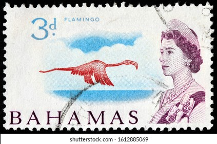 LUGA, RUSSIA - OCTOBER 5, 2019: A stamp printed by BAHAMAS shows image portrait of Queen Elizabeth II against view of Caribbean Flamingo (Phoenicopterus ruber) in flight, circa 1967