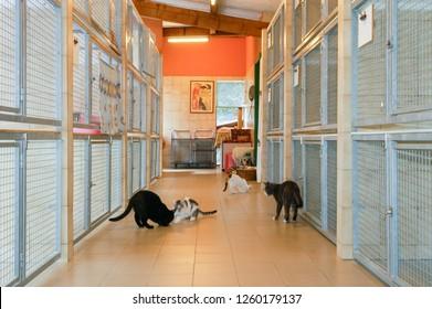 Lugano, Switzerland - 15 September 2002: cats at the animal shelter of Lugano on Switzerland