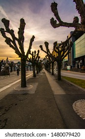 Lugano/Switzerland - February 18,2015 - The odd trees from the streets of Lugano gives the city a cool look