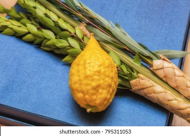 Lulav and Etrog, symbols of the Jewish holiday of Sukkot