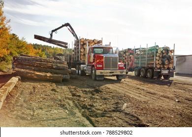 lumber trucks unloading trees