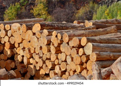 Lumber yard with stacked lumber