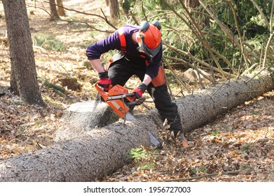 a lumberjack with a chainsaw cutting trees in the forest