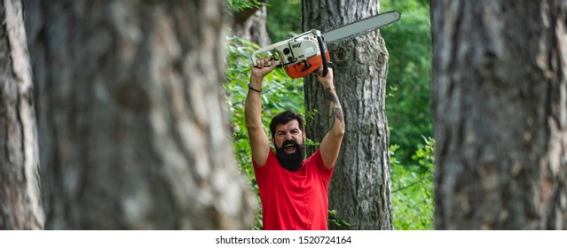 Lumberjack with chainsaw in his hands. The Lumberjack working in a forest. Deforestation. The Lumberjack working in a forest. Lumberjack on serious face carries chainsaw