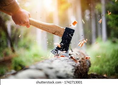 Lumberjack in checkered shirt chops tree in deep forest with sharp ax, Detail of axe, wood chips fly around.